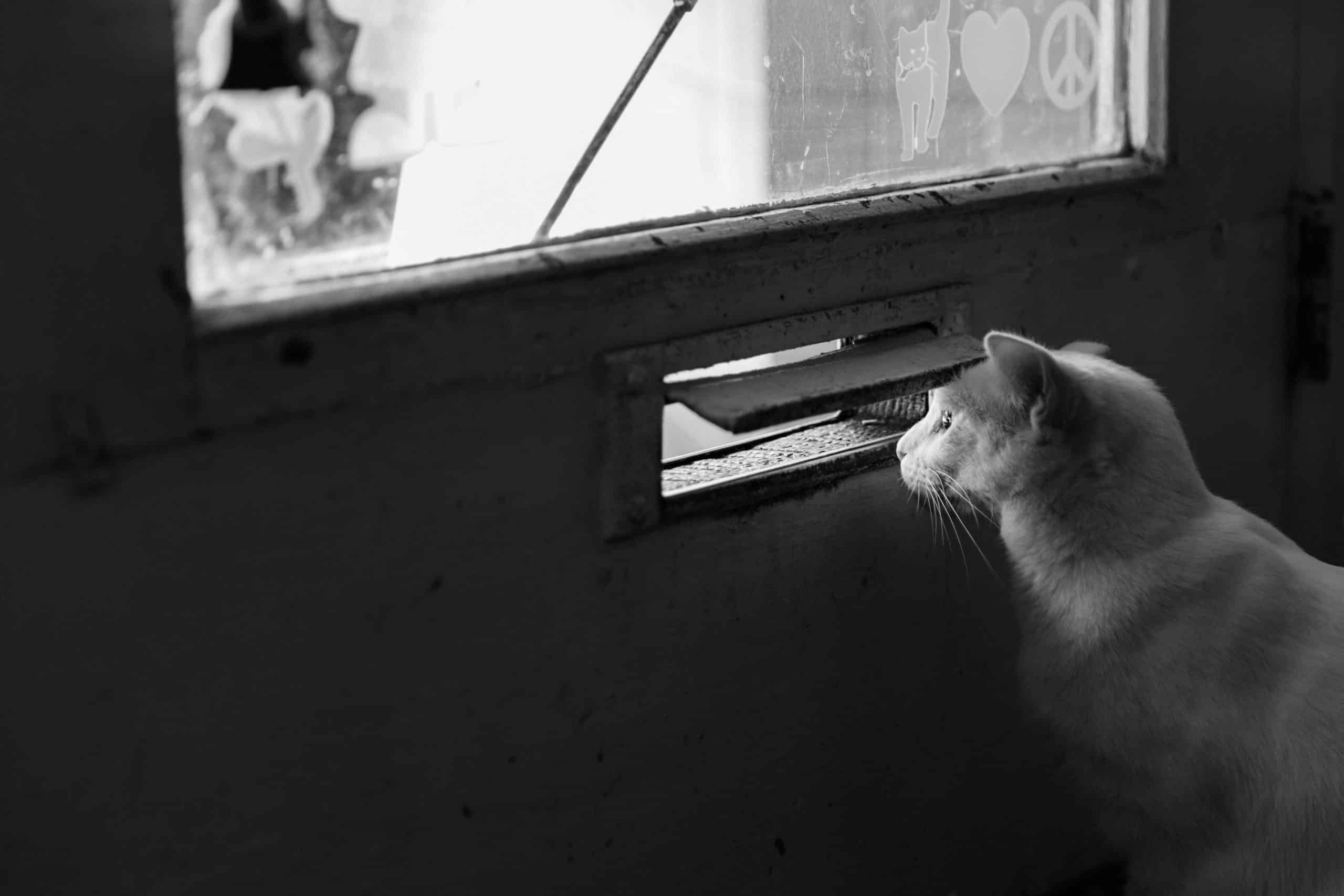 installation chatière sur simple vitrage geneve