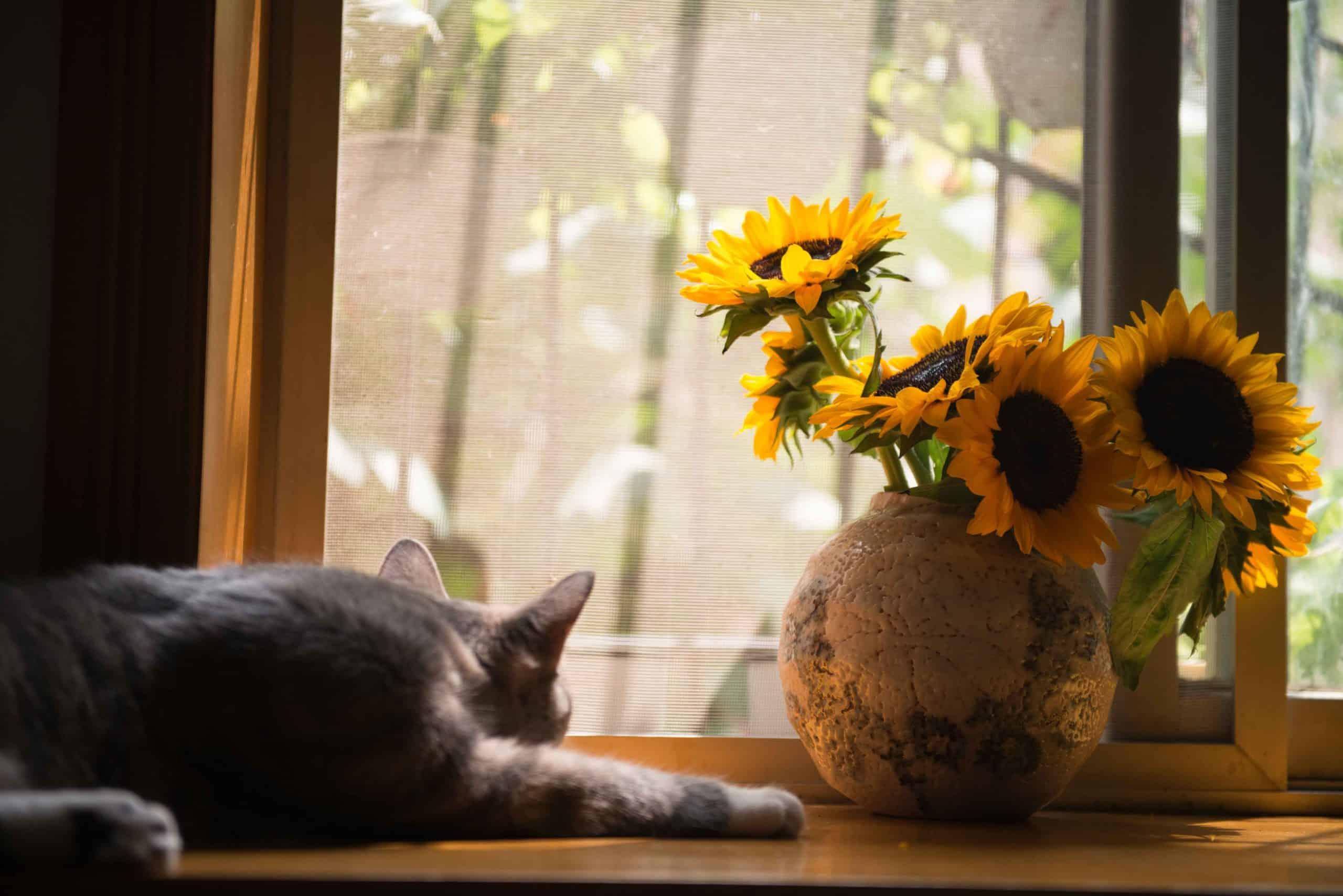 prixinstallation chatière sur simple vitrage