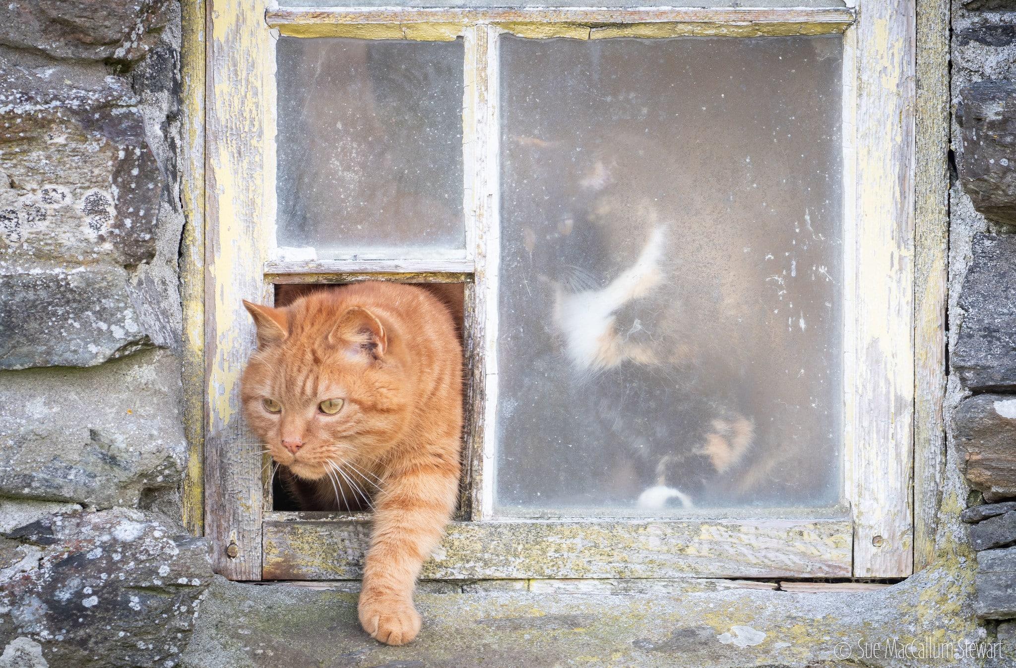 installation chatière sur simple vitrage